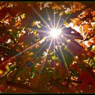 Fall-ing Star by Deb  Badt-Covell
