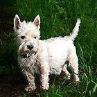 A Scottie Dog by Forfarlass