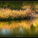 Golden Reflections by Deb  Badt-Covell