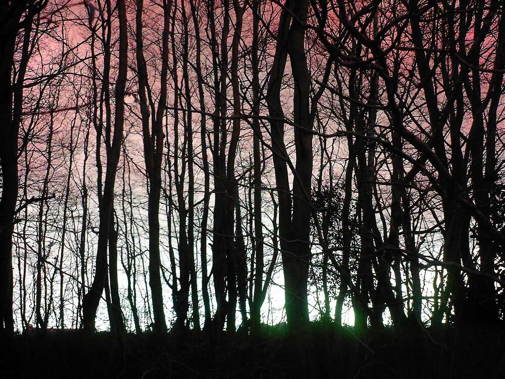 Forest Glow 4 by wysiwyg