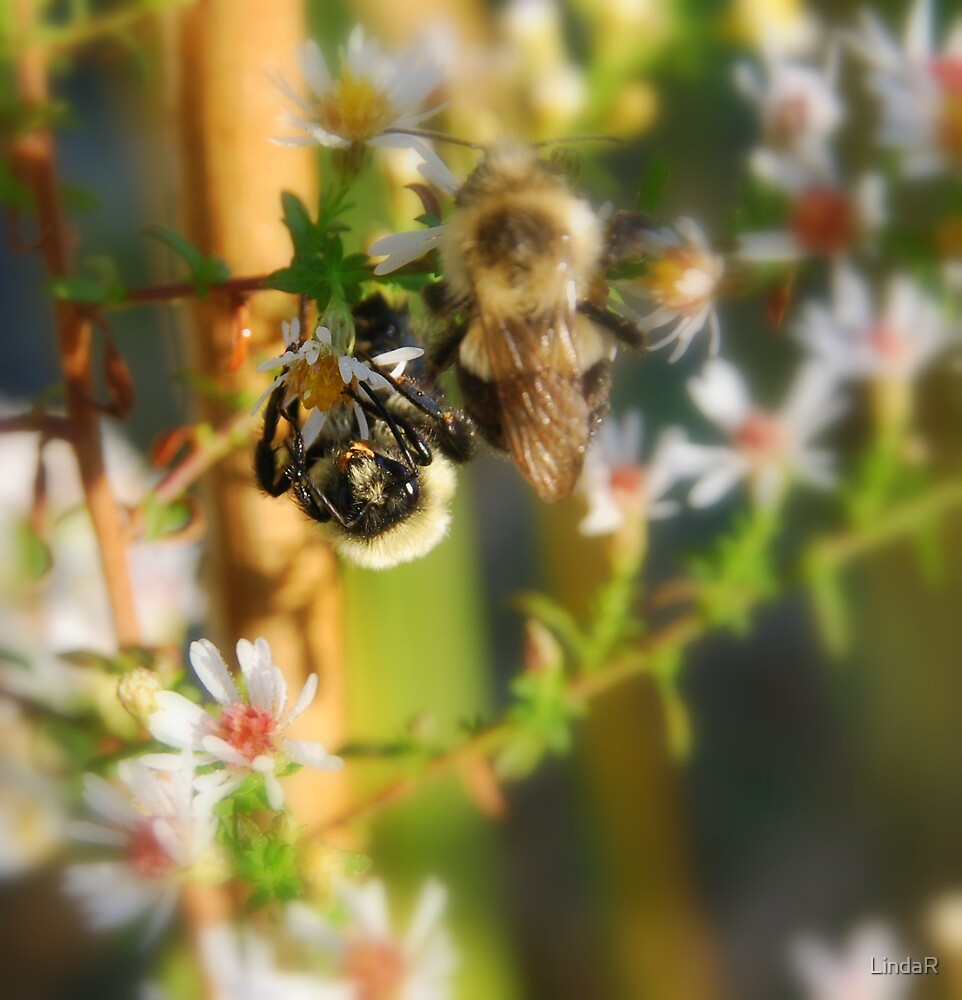Lessons from the Bees... by LindaR