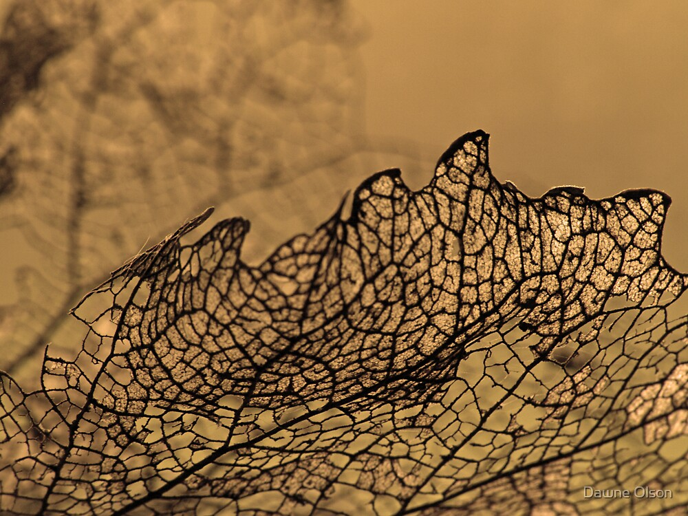 Fragility by Dawne Olson