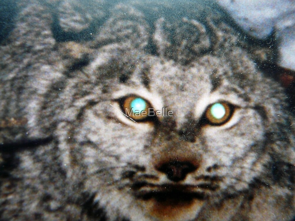 Canadian Lynx by MaeBelle