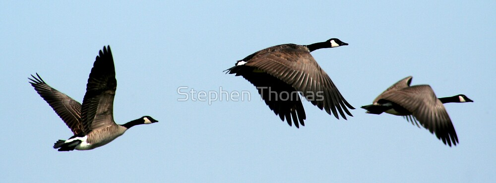 A Lesson In Flying (up down up) by Stephen Thomas