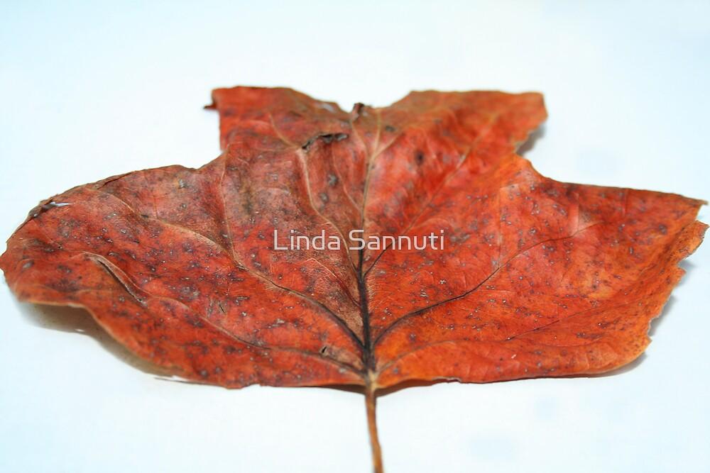 Leaf by Linda Sannuti