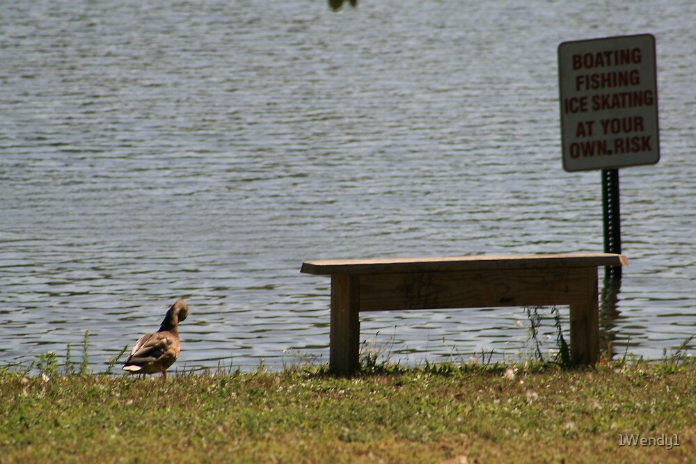 duck at the park by 1Wendy1