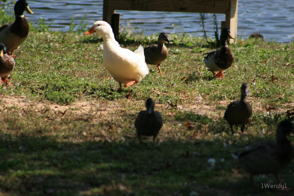 odd bird out by 1Wendy1