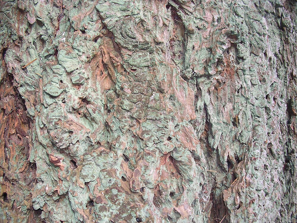 Bark by amber cuenca