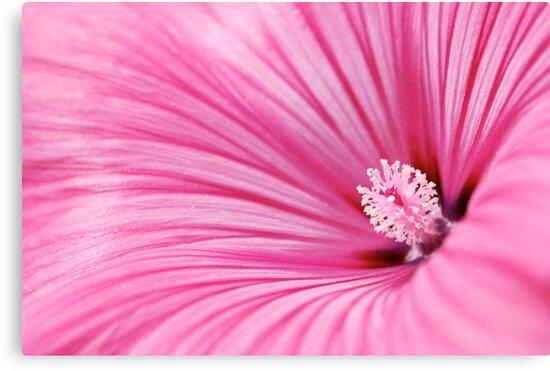 radiation flower by mc27
