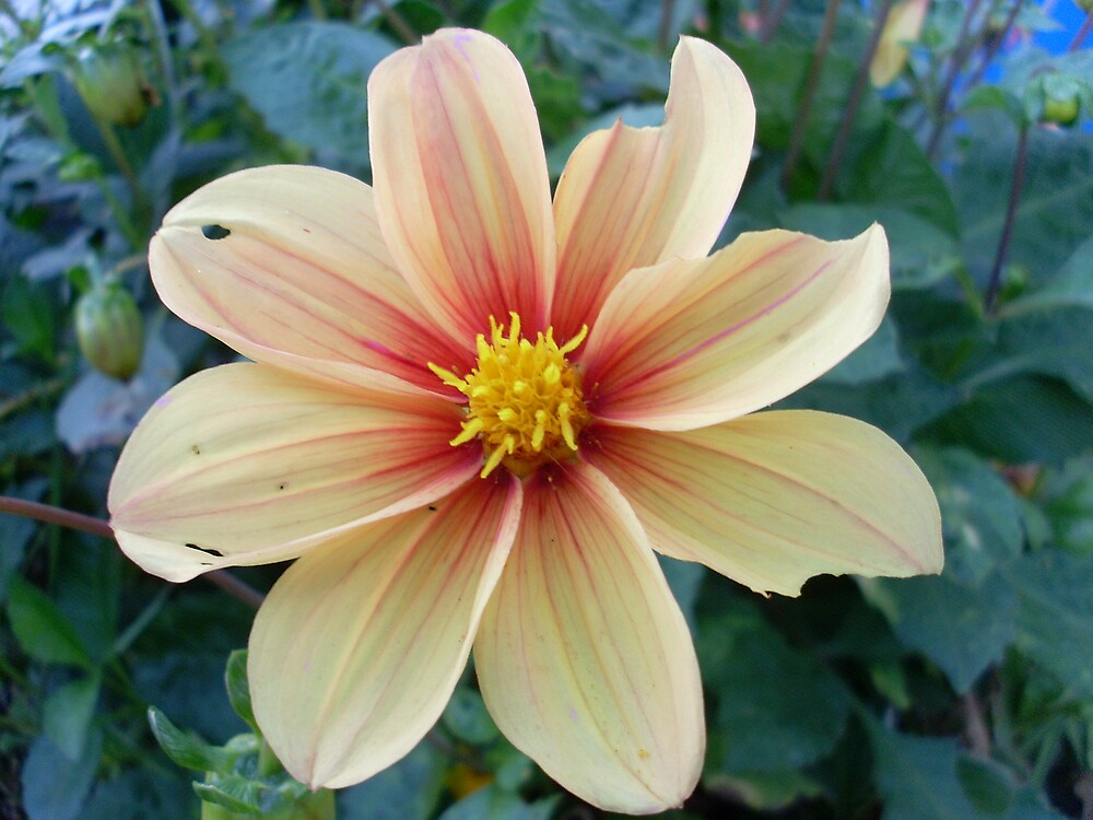 Seven Pure Petals Of Colour by 6719jason