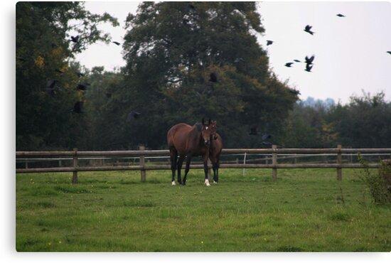 Mother & Foal by Iani
