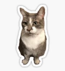 Holly the Cat Sticker