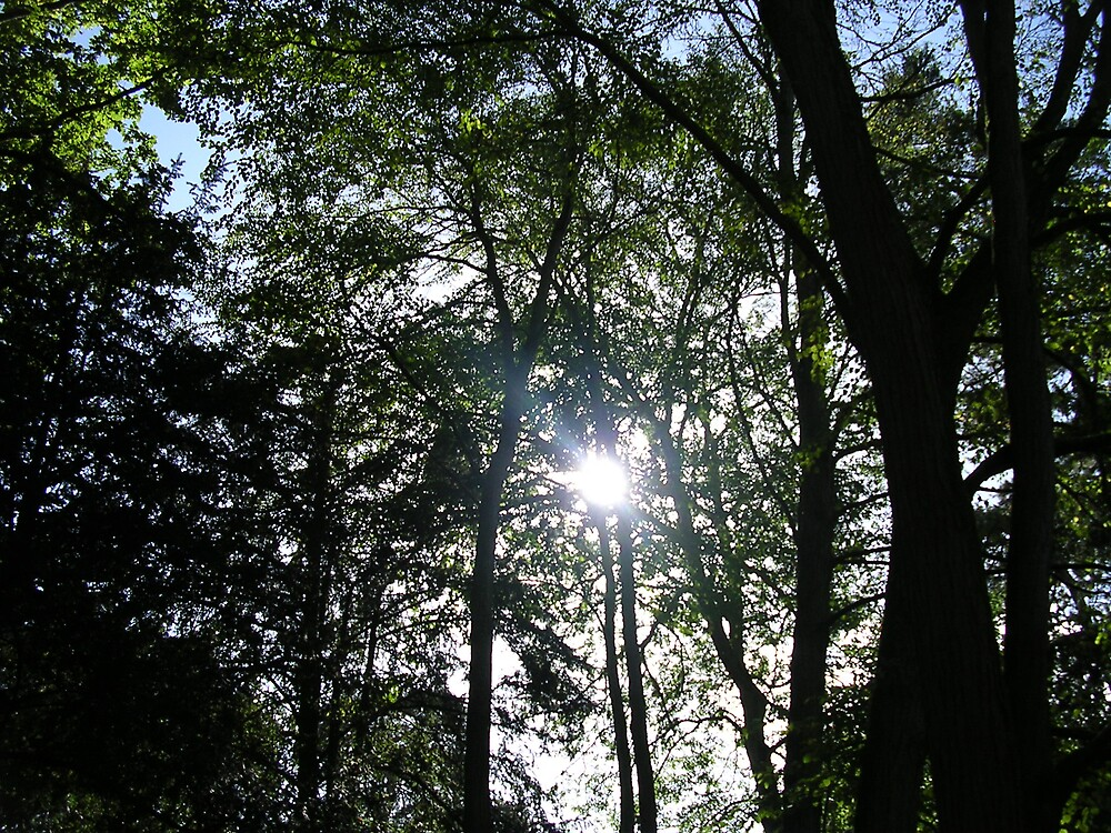Sunlight in Tree by amber cuenca