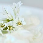 White Floral Platter by wildpatchouli