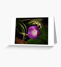 Mourning Glory Greeting Card
