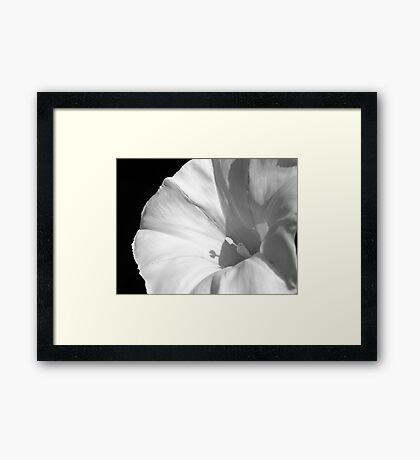 Elegant Intruder Framed Print