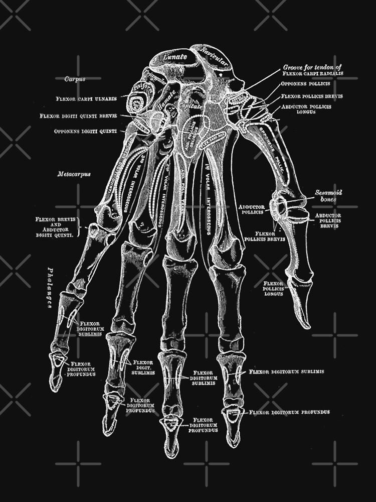 Vintage Anatomical Hand by StilleSkygger