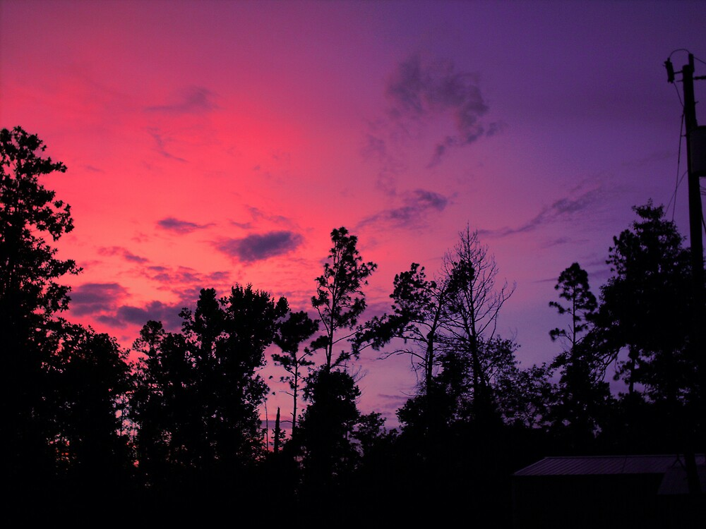 sunset over the back yard by talindsey
