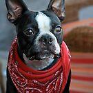 Perro Bandito by Sue  Cullumber