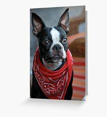 Perro Bandito Greeting Card