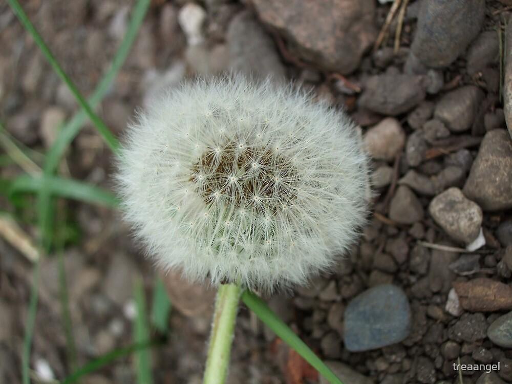 a beautiful wish by treaangel