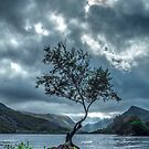 The Lone Tree by Anthony Hedger Photography
