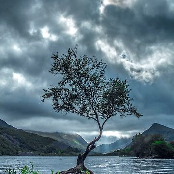 The Lone Tree by anthonyhedger