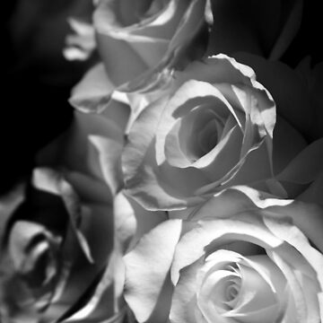 White Roses by purpleelephant