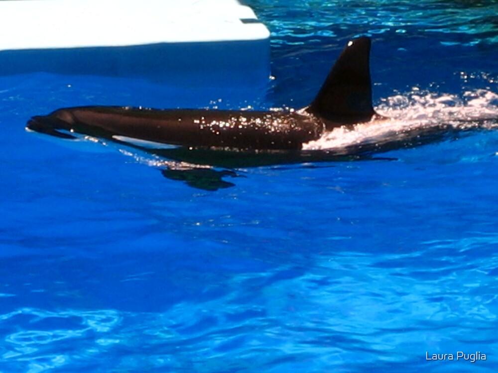 Killer Whale by Laura Puglia