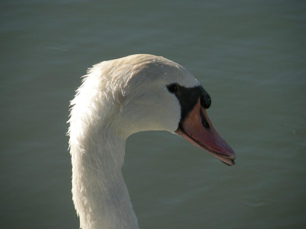 Swan having fun! by Bonnie Pelton