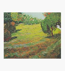 Garden with weeping willow 1888 Vincent van Gogh Photographic Print