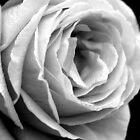 Durch das Licht der Rose von Samantha Higgs