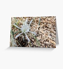 White sand lily in dry grass and leaves Greeting Card