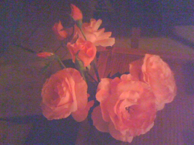 Rich Roses by ~  Virginia ~