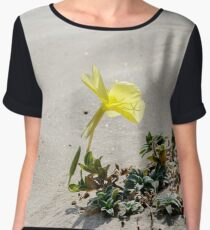 Oenothera drummondii, Beach evening-primrose flower with leaves on a sand beach Women's Chiffon Top