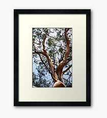 Scenic trunk of eucalyptus tree with green crown Framed Print