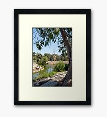Eucalyptus grove, river, dry trees green foliage Framed Print