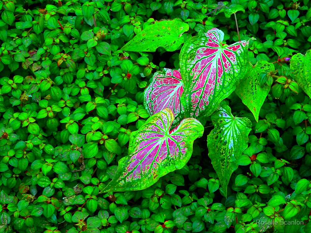 A Touch of Coleus by Rosalie Scanlon