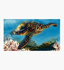 Tropical Waters Photographic Print