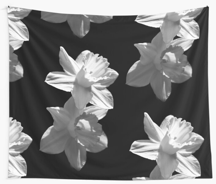 Daffodils in Black and White by Samantha Higgs
