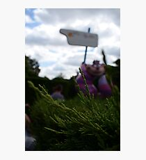 Cheshire Cat in Alice's Curious Labyrinth [Unfocused] Photographic Print