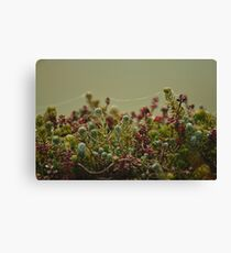 Succulent Web Canvas Print