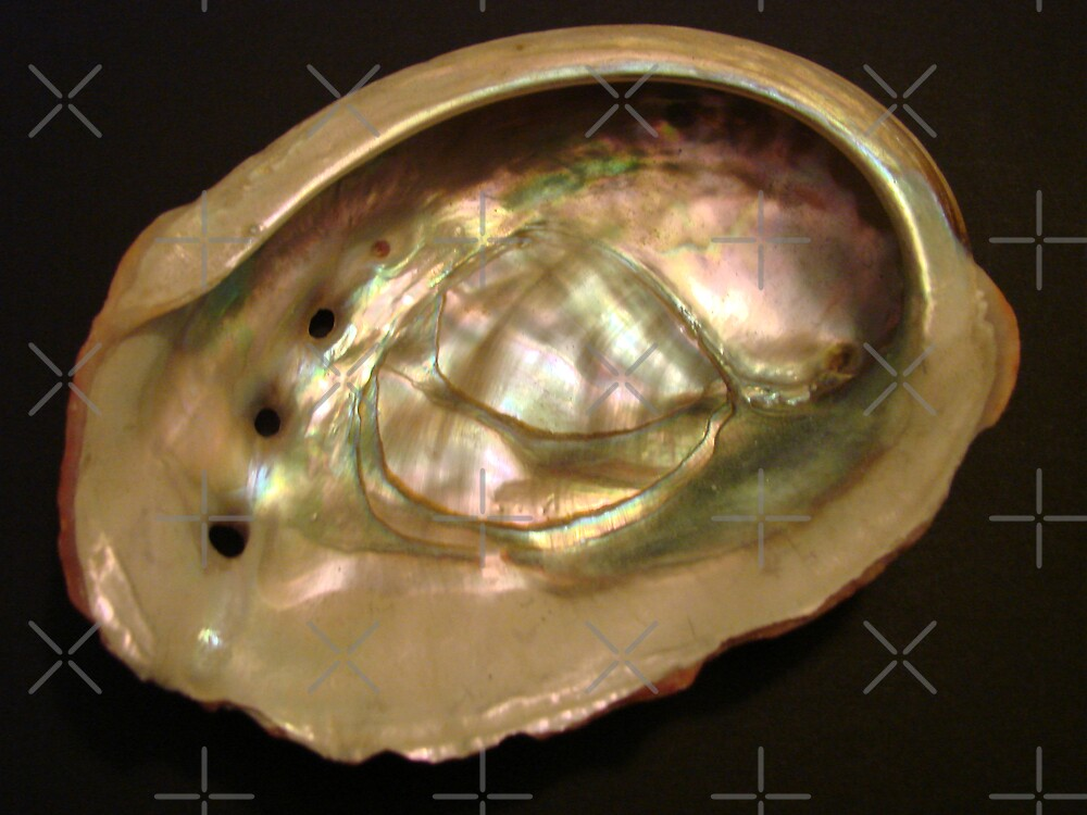 Abalone 1 by Kimberly Miller