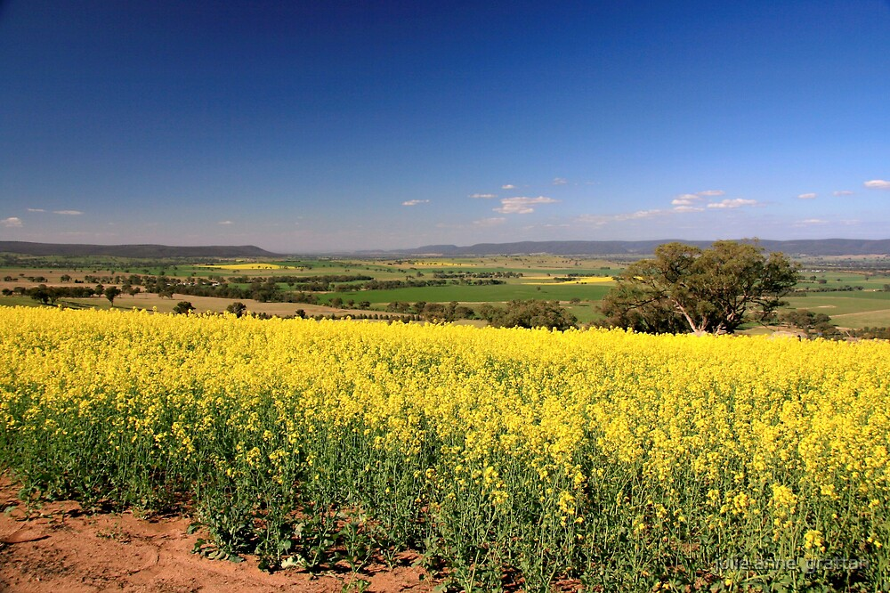 Canola and the Lachlan Valley by julie anne  grattan