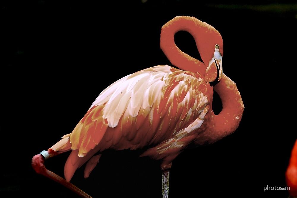 Flamingo Pride by photosan