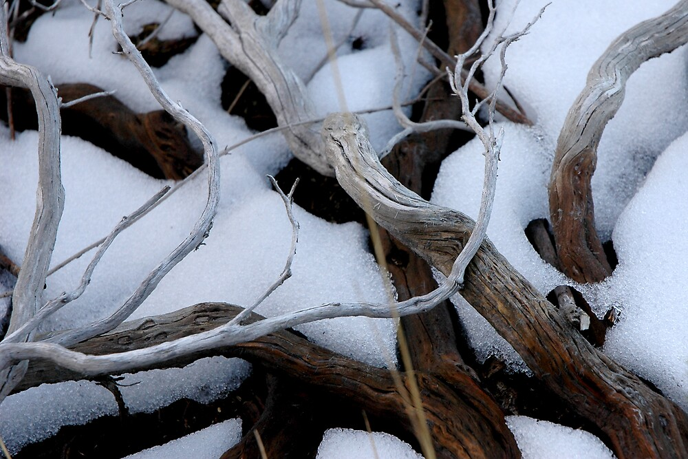 Snow & Sticks by Benn Hartung