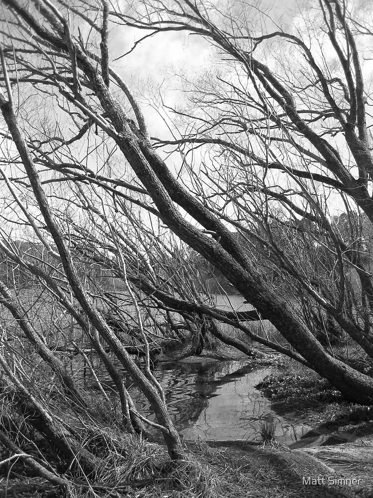 Trees at Lake Daylesford by Matt Simner