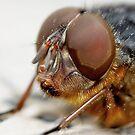 Fly Eye by Lance Leopold