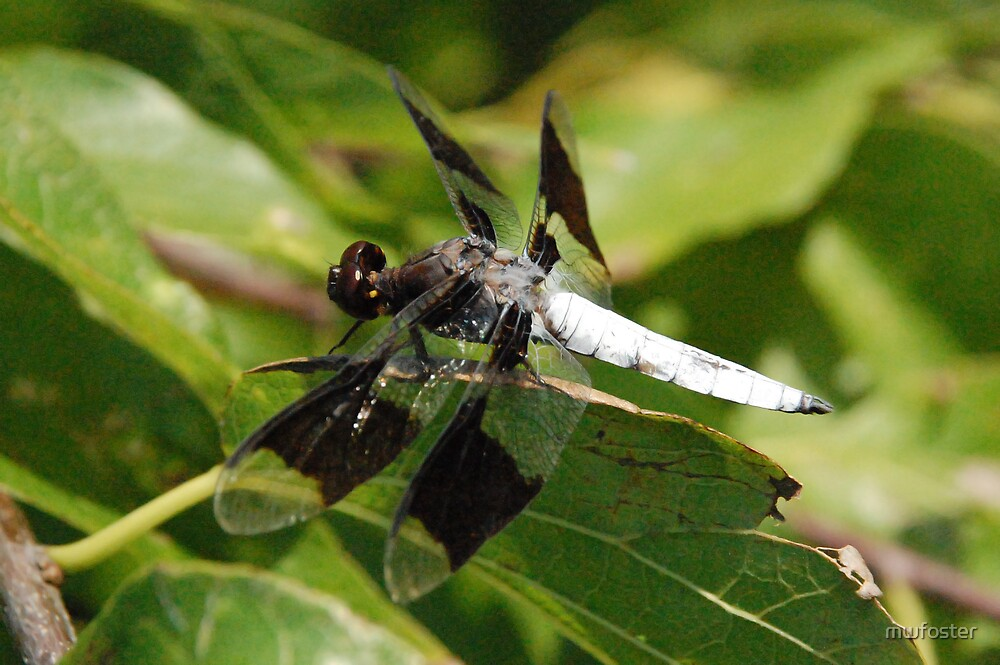 White Dragonfly by mwfoster
