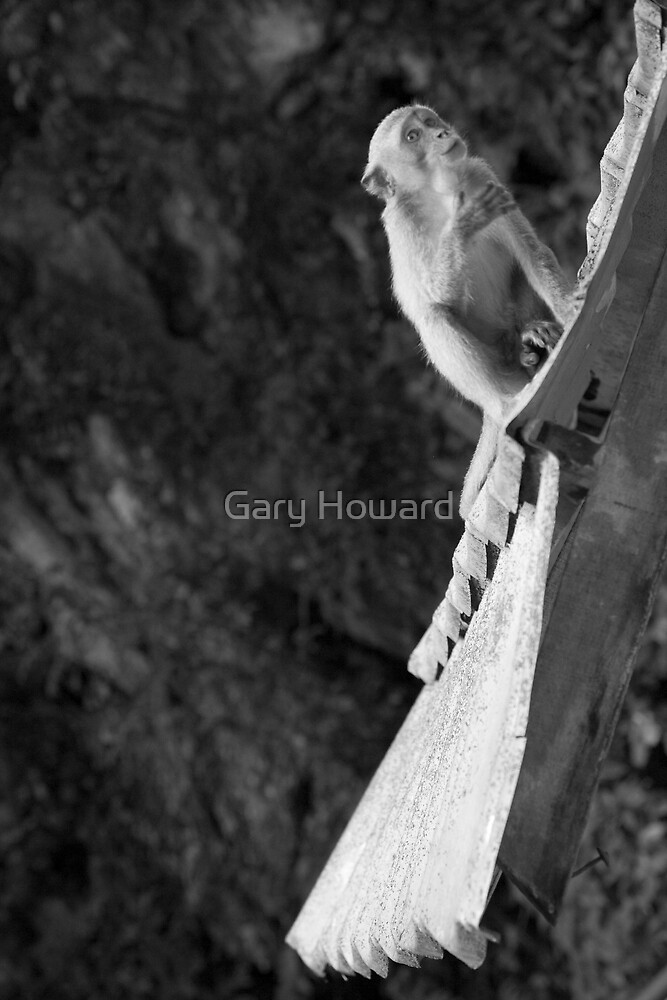 another monkey by Gary Howard